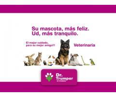 Clinica Veterinaria Palermo Capital Federal