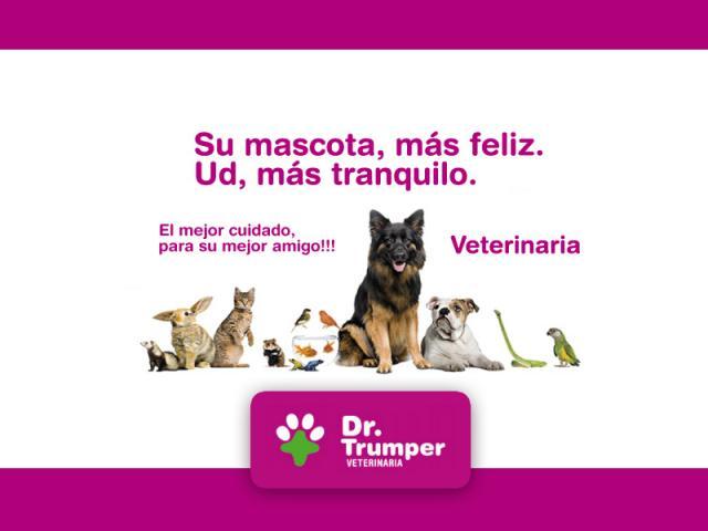 Veterinaria - pequeños animales y animales exóticos