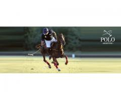 Play polo in Argentina