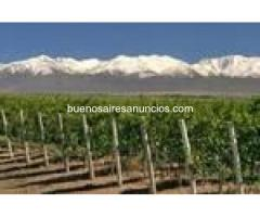 Quinta 77hta con Bodega en mza,zona rural exporte vinos x chile al asia.
