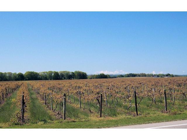 Bodega de vinos en Lujan mendoza con 5 casas vta contado